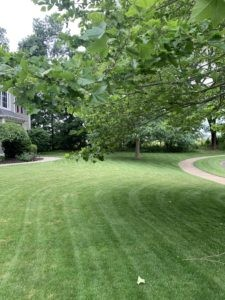 Blow grass clippings with leaf blower